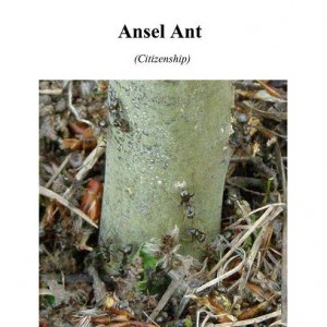 Ansel Ant Cover